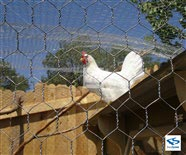Poultry Wire Mesh Netting - Chicken Confinement