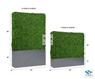 4 Foot & 8 Foot Boxwood Hedge with Planter Box
