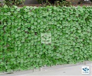 Ivy Fence Roll
