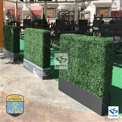 Boxwood Hedge with Planter Box Installation