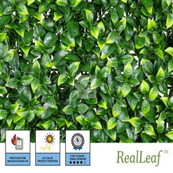 NatraHedge Faux Ficus Detail and Package