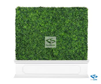 Boxwood Hedge With Planter Box - White Chateau Traditional